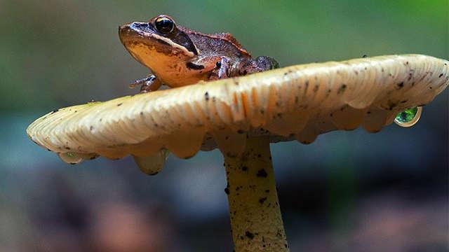 Sortie nature : milieux humides, espaces naturels à protéger