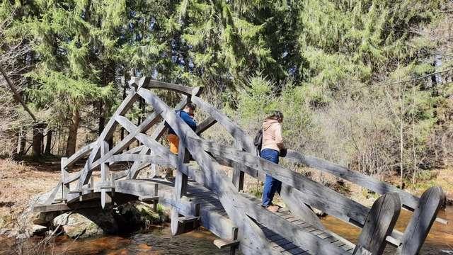 Sortie nature : découverte de la rivière et de ses habitants