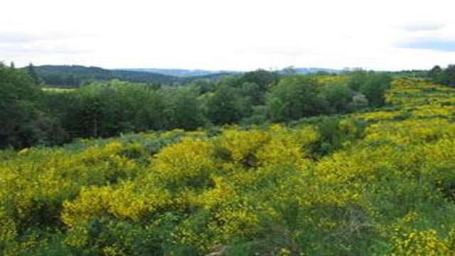 Forêt domaniale de la Feuillade