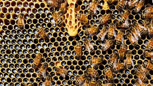 Le rucher de Papybeil