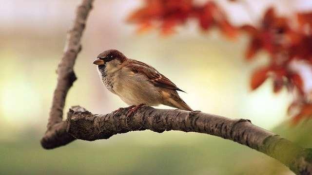 ANNULÉ  A la découverte des oiseaux hivernants