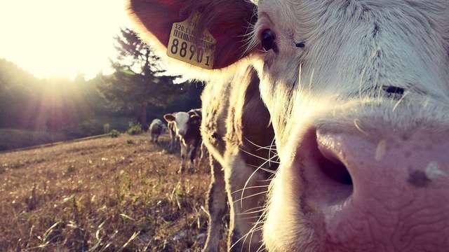 MONTLAIT : visite de ferme