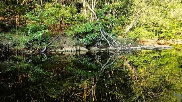 Balade découverte de la biodiversité locale