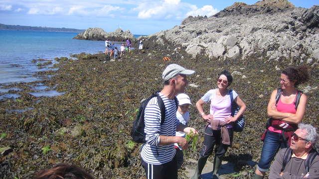 Sortie découverte des algues et atelier culinaire