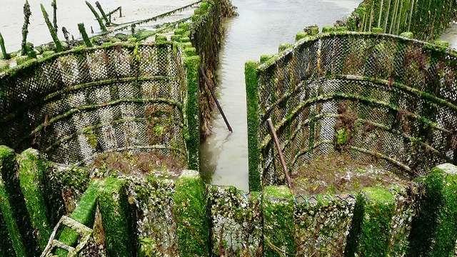 Visite guidée de la pêcherie Maillard