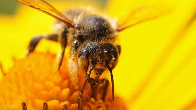 Découverte apicole : le rucher de la forêt d'Andaine