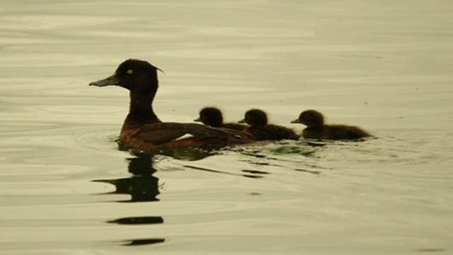 Réserve Ornithologique de la Grande Noé