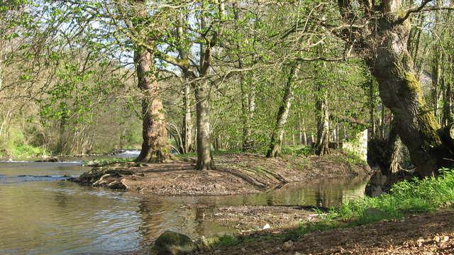 Sentier libellule au bord de la rivière