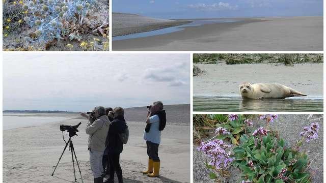 A la rencontre des phoques en Baie de Somme - Visite Guidée
