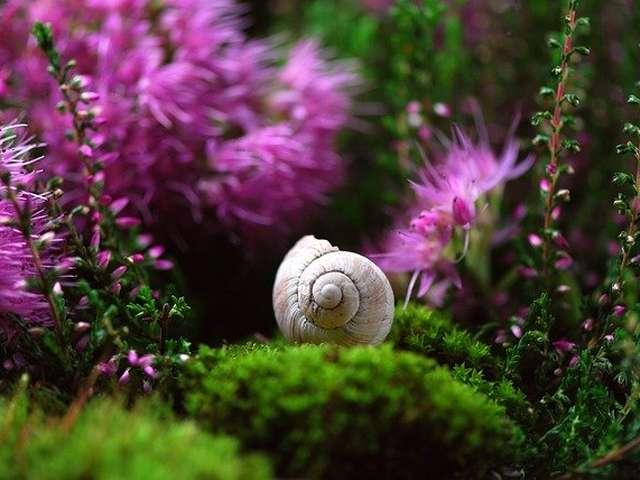 Le petit escargot, théâtre d'ombres, par la compagnie on regardera par la fenêtre