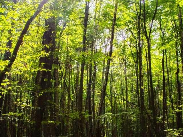 La Forêt et son Avenir