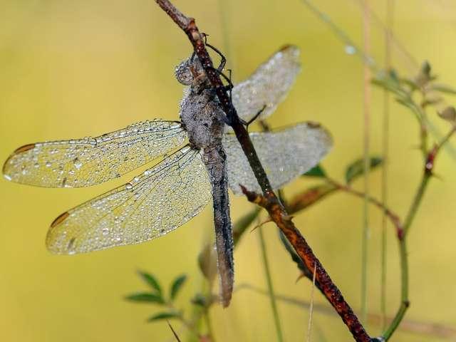 Jeu de Piste Libellules ou Papillons