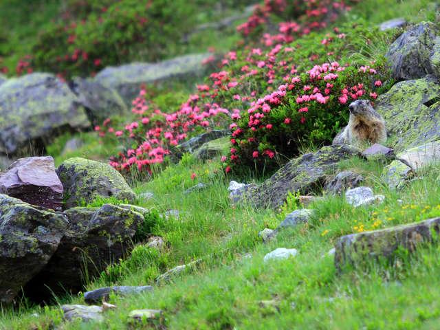 Balade à la rencontre des marmottes