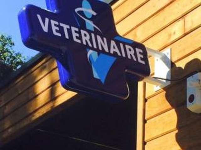 Clinique Vétérinaire Adhocvet