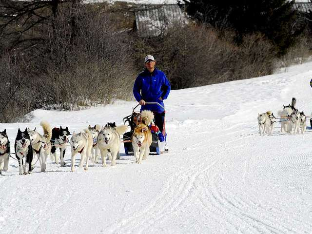 Husky Adventure - Dogsledding