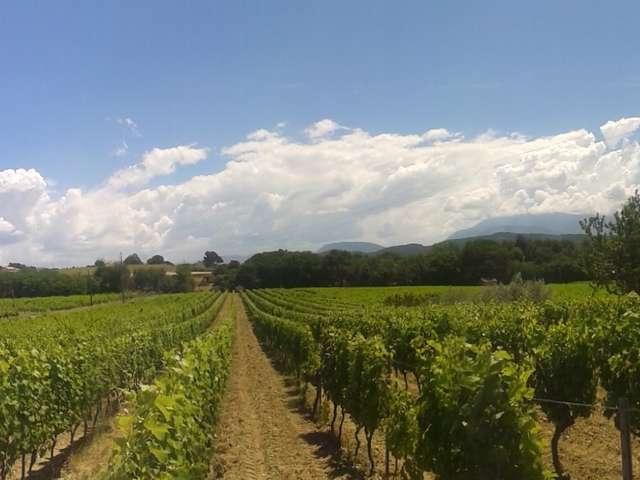 Balade et dégustation mets/vins au domaine Terre de Gaulhem