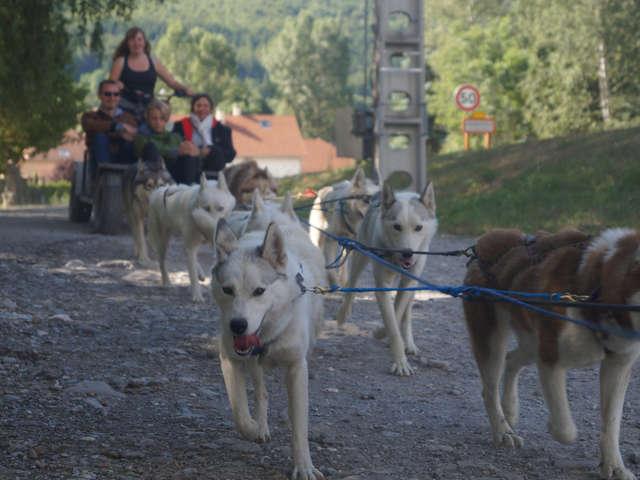 Cani-kart - Travel Dog