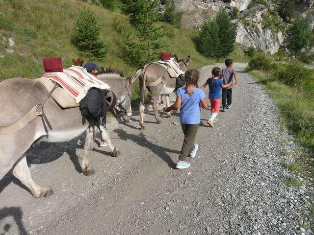 Randonnées et ateliers avec les ânes