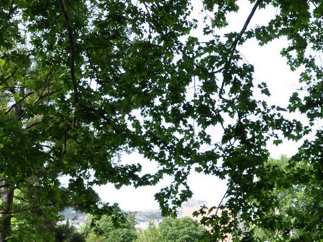 Jardin Chanot