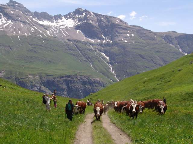 Meeting  the alpine farm of the Vallon