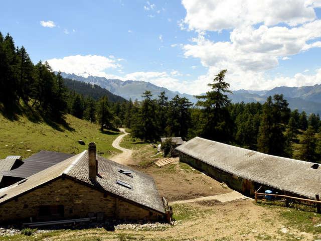 Alpage du Col du Tronc