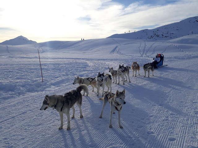 Chiens de traîneau - Travel Dog