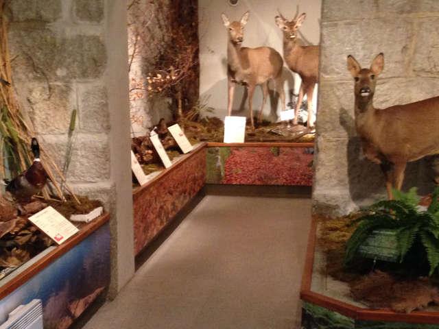Visite du Musée de la Faune