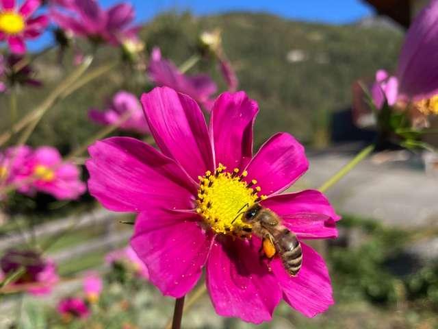 Belegstation für Bienenköniginnen