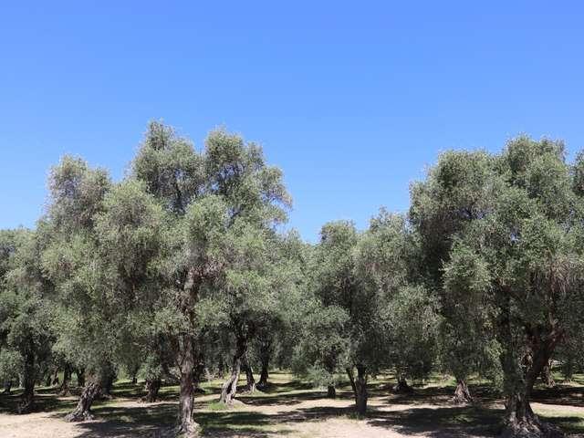 Giardino pubblico: Parco del Pian