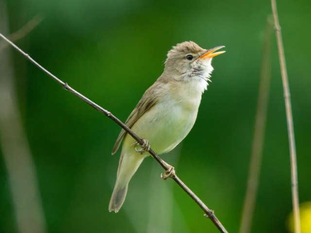 Sortie nature : découverte des oiseaux du jardin