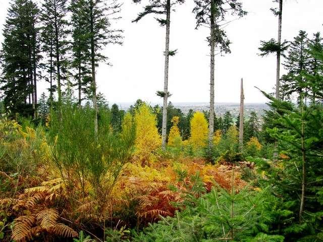 Le Bois de Chabannes