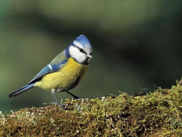 Visite - Chants d'oiseaux au bois