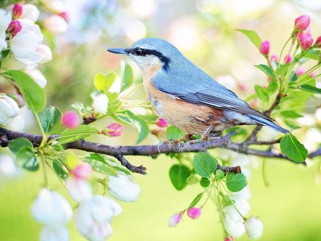 [ANIMATION CONFIRMEE] - Les Oiseaux