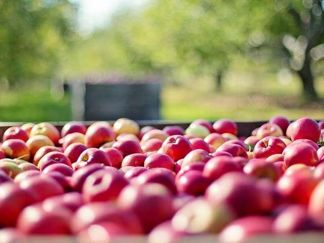 Foire aux pommes aux Vergers du Petit marais