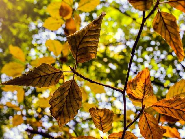 Le Moulleau fête l'automne