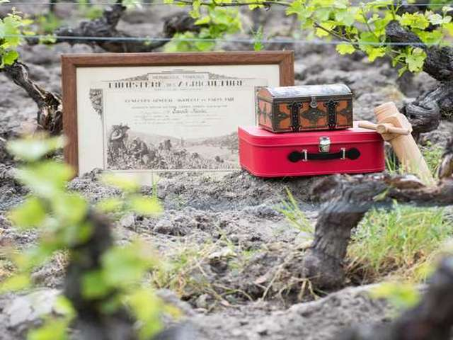 Chasse au trésor dans les vignes - Automne à la ferme