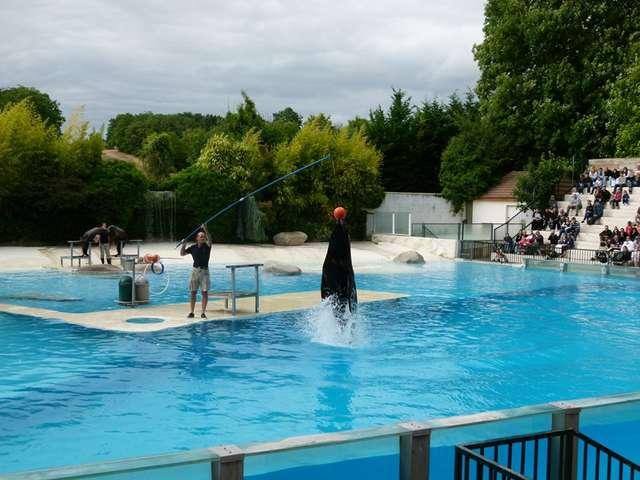 Spectacles Les Maîtres des Airs et L'Odyssée des Lions de Mer au ZooParc de Beauval