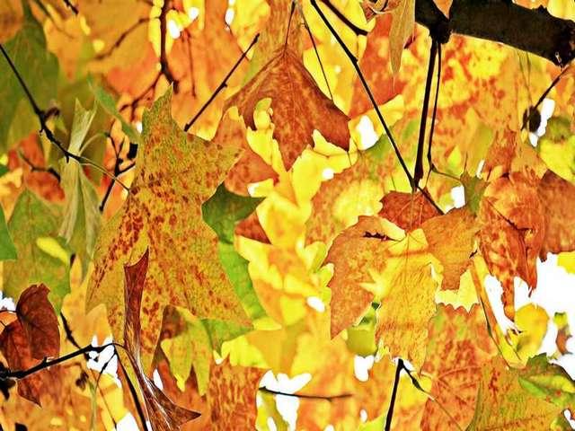 Instants nature - Pépites d'automne - Vallée du Cher - Montrichard