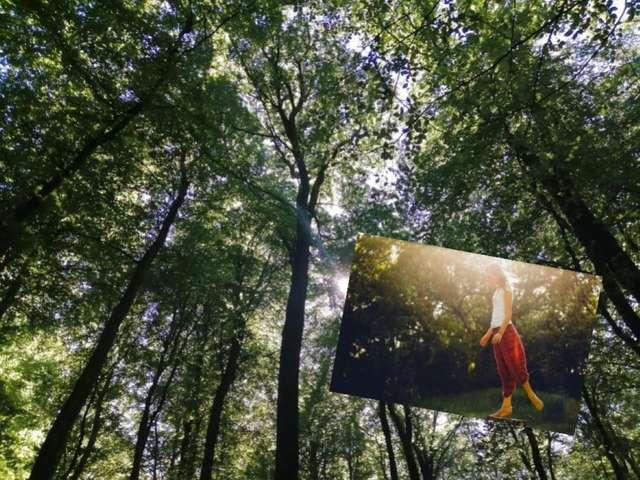 [ANIMATION CONFIRMEE] - La magie de la Forêt d'Eu - Bain de forêt - Atelier corporel sylvothérapie