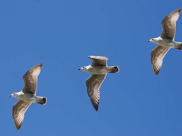 Les Oiseaux du Port