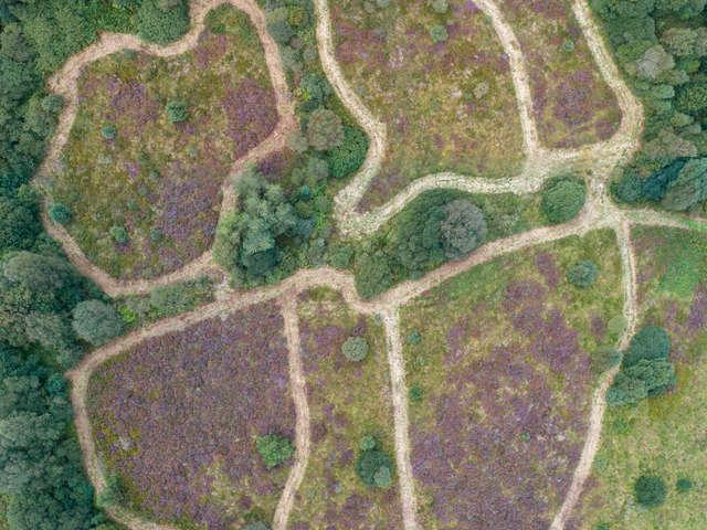 Réserve Naturelle Régionale des landes, prairies et étangs de Plounérin