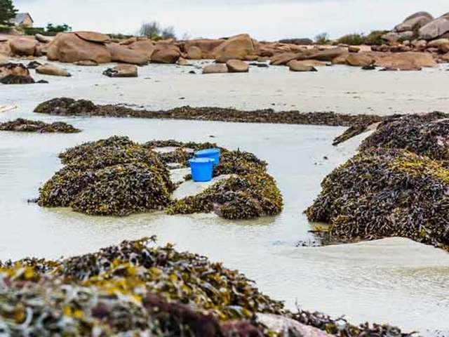Sortie découverte Les algues à marée basse