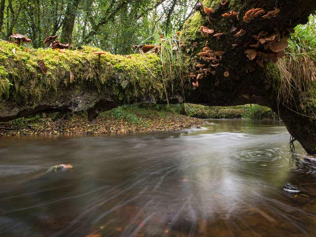 Léguer en Fête - Léguer, rivière sauvage
