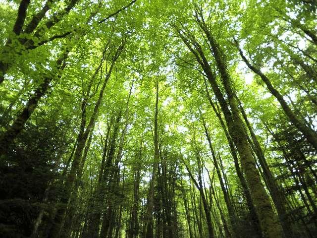 Léguer en Fête - Histoires d'arbres et histoires d'hommes en forêt de Beffou