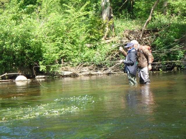 stage de perfectionnement de pêche à la mouche en rivière