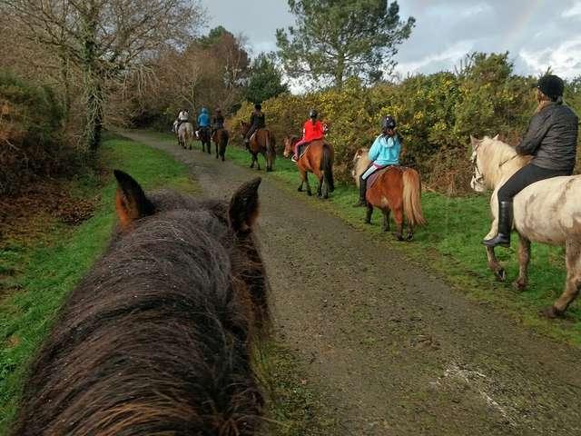Les poneys de Kerjean