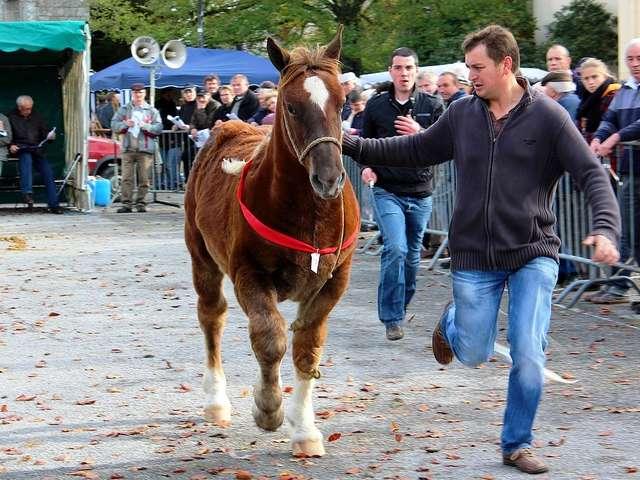 La Foire aux chevaux à l'ancienne