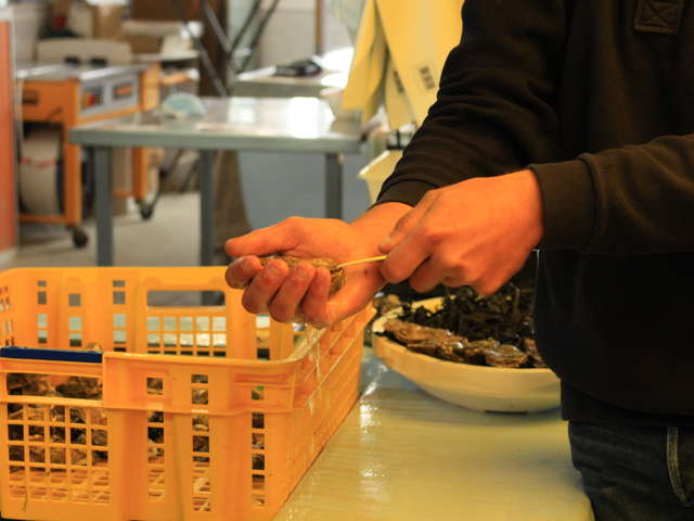 L'Atelier de l'huître