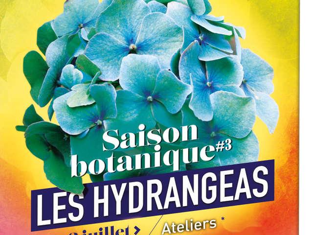 SAISON BOTANIQUE DE L'HYDRANGEA