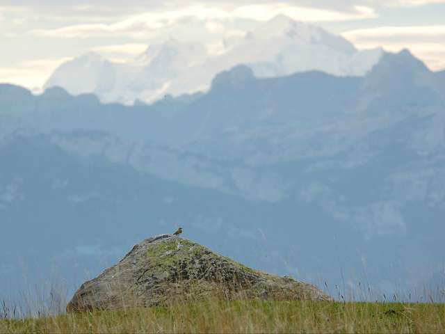 Découverte panoramique de l'alpage du Plan